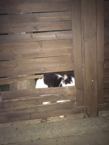 Shycat's hole in the fence